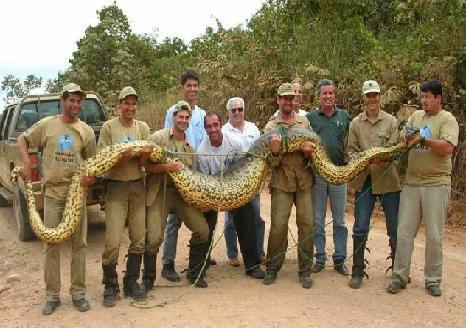 Filme Anaconda 2 – E a Anaconda Brasileira
