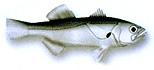 Peixe-Preciso de receitas para fazer-preparar Pescadinha