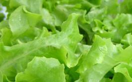 Vegetarianos praticantes de vegetarianismo