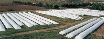 Silobag e Silobolsa para armazenagem de grãos você conhece?