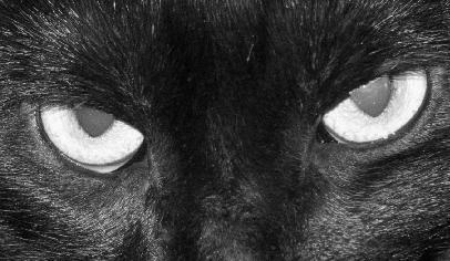 Gato preto e a sexxta feira 13