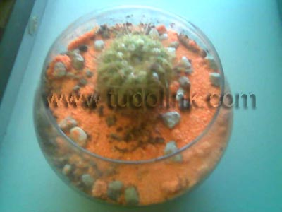 Plantar cactos em jardins e vasos