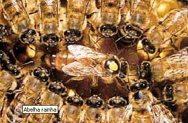 Muitas vezes acabar com abelhas requer pessoal especializado