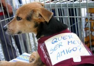 Adotar um cachorro de rua vira-lata