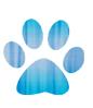 Divulgar cachorro perdido e outros animais