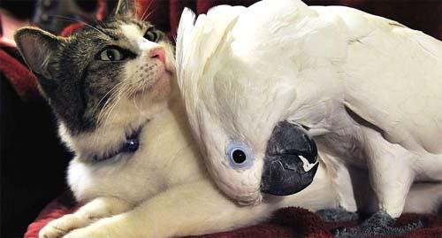passarinho-e-gato-juntos
